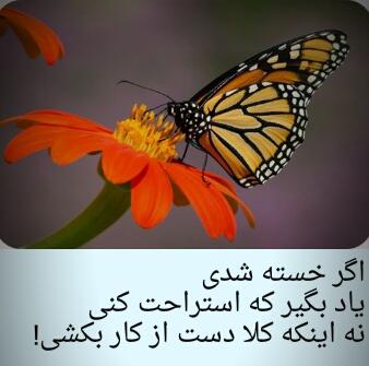 applex_1482040034983